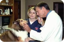 Coppell Veterinary Hosptial has one of the most experienced and qualified staffs in the Dallas and Fort Worth Area.
